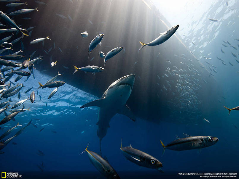 foto-foto-terpilih-national-geographic-yang-menakjubkan-the-lord-of-the-ocean